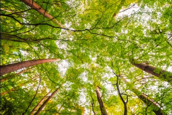 Lyon 9 :  bientôt une forêt de 1000m² à la Duchère !